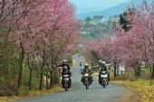 Kinh nghiệm du lịch Đà Lạt lễ 30 tháng 4