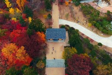 Khi lá phong chuyển màu đỏ rực ở Hàn Quốc