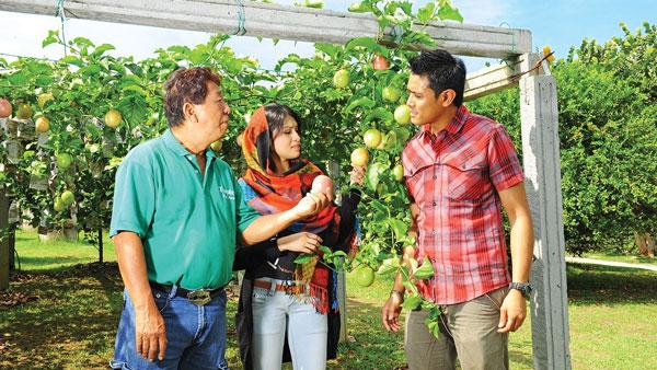 Vườn nhiệt đới Tropical Fruit Farm - du lịch Penang