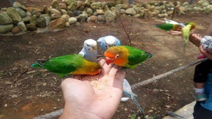 Bạn có thể cho những cú vẹt ăn ( ảnh sưu tầm internet)