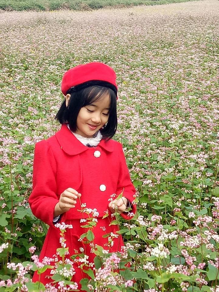 Lung linh vẻ đẹp hoa tam giác mạch( ảnh tự chụp của Huyền Linh)