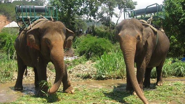 Thử nghiệm cảm giác cưỡi voi ( ảnh sưu tầm )