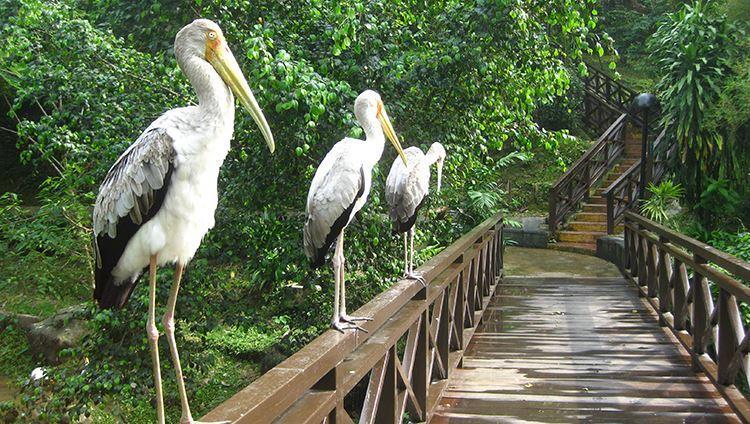 Các loài chim trong khu vườn ( ảnh sưu tầm)