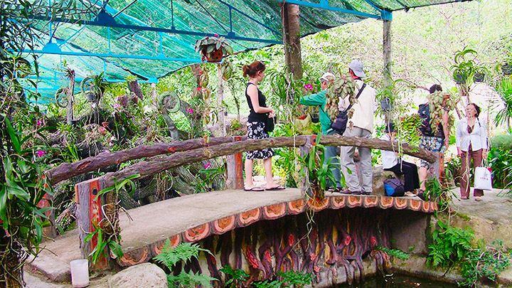 Dạo bước trên cầu và ngắm hoa lan (ảnh sưu tầm)
