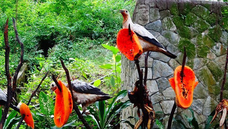 Khám phá khu vườn chim với nhiều loài phong phú ( ảnh sưu tầm)