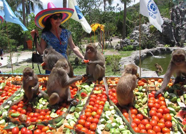 Đảo Hoa Lanvà đảo Khỉ điểm đến không nên bỏ lỡ