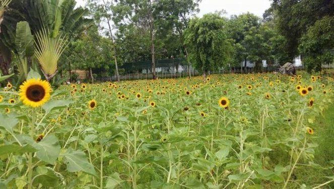 Những địa điểm đi chơi Tết ở gần Sài Gòn