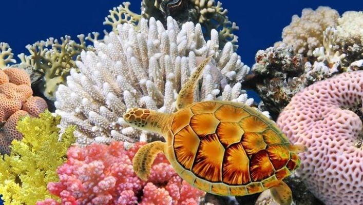 Chiêm ngưỡng vẻ đẹp rực rỡ của san hô (ảnh internet)