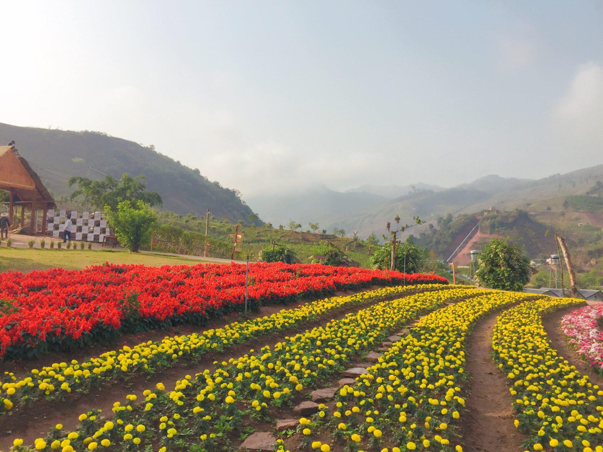 Happly Land - Mộc Châu
