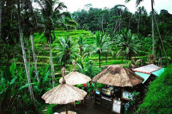 Tegallalang Rice Terraces Ubud