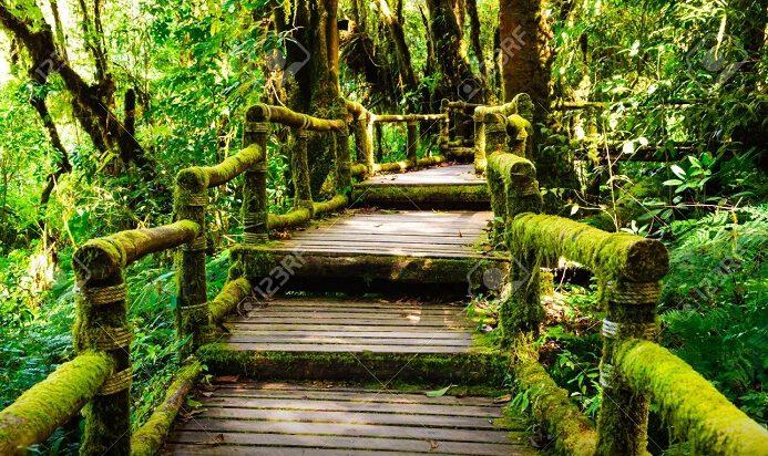 Khám phá thiên nhiên vườn quốc gia (ảnh inter net)