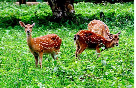 Khám phá rừng quốc gia Cúc Phương (ảnh sưu tầm)
