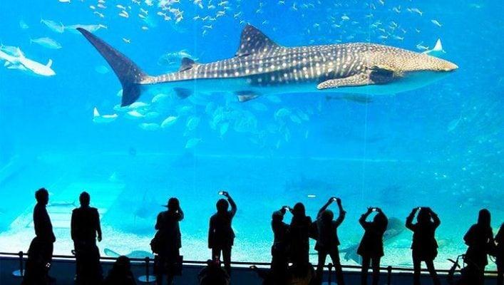 Ngắm nhìn các chú cá ở thủy cung (ảnh internet)
