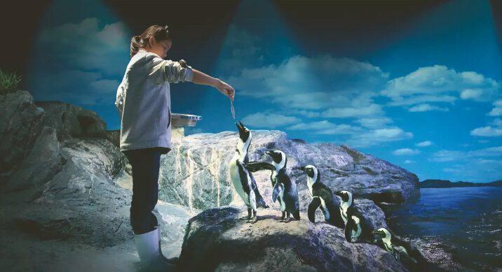 Những chú chim cánh cụt dễ thương (ảnh internet)