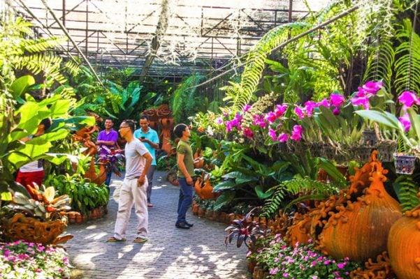 Khu vườn hoa lan (ảnh internet)