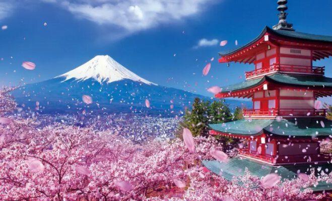 Ngắm hoa ở Nhật Bản (ảnh internet)