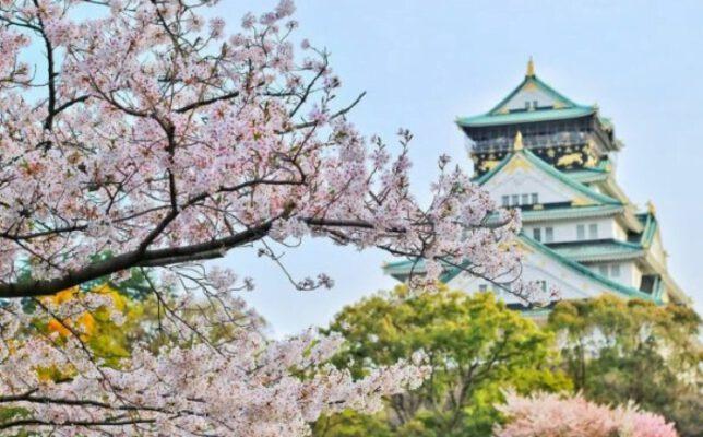 Ngắm hoa Osaka (ảnh internet)