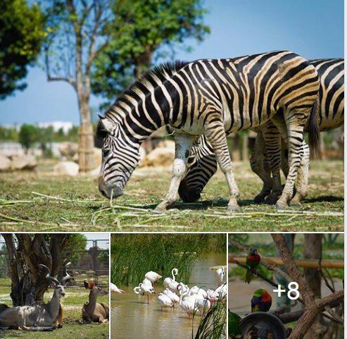 River Safari Vinpearl Land Hội An