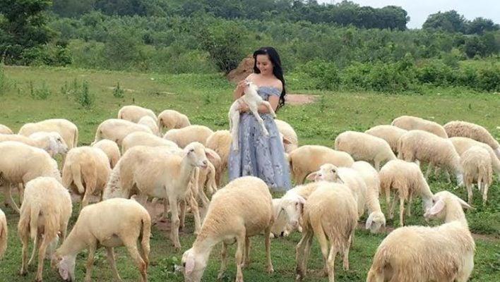 Vui đùa cùng những chú cừu dễ thương (ảnh internet)