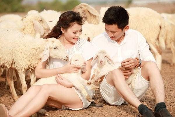 Chụp hình lãng mạn bên đàn cừu (ảnh internet)