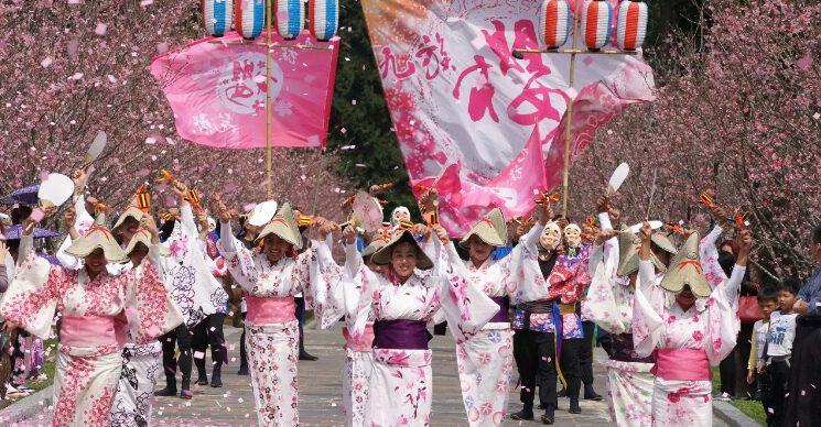lễ hội hoa anh đào ở làng văn hóa thổ dân Formosa (ảnh internet)