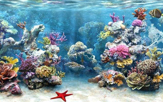 Ngắm san hô tuyệt đẹp (ảnh internet)