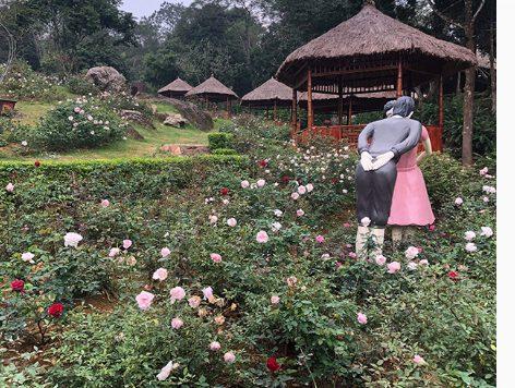 Vườn hoa đẹp lãng mạn (ảnh internet)