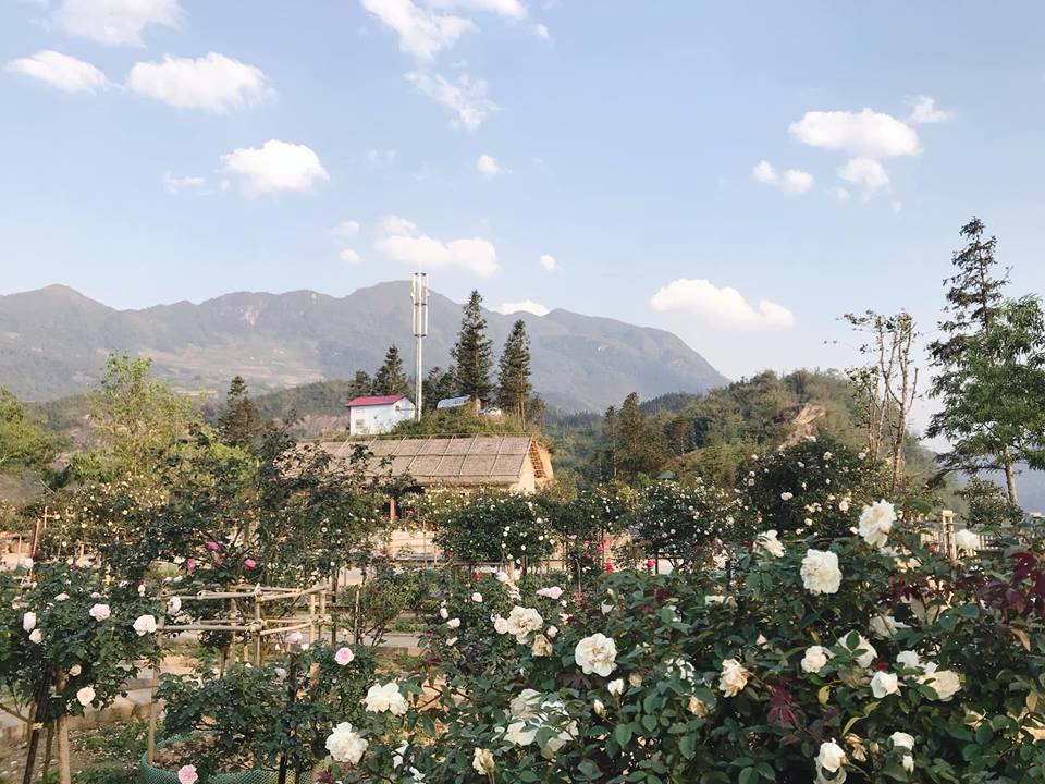 Những cánh đồng hoa ở Sapa - Chốn bồng bềnh mây trắng