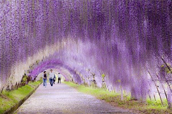 Con đường hoa đẹp lãng mạn trong khu vườn (ảnh internet)