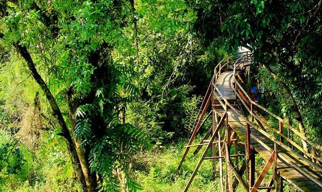 Con đường xuyên rừng quốc gia Cát Tiên (ảnh internet)