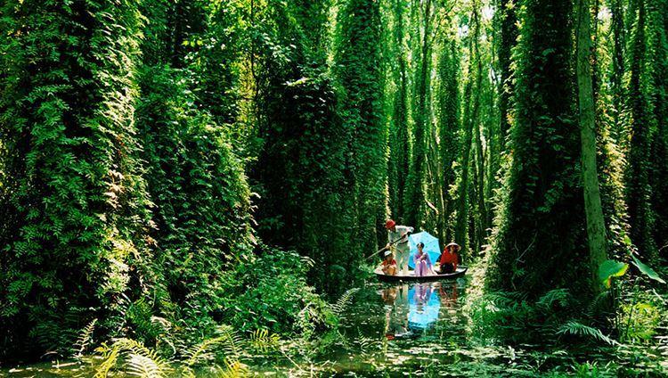 Đi thuyền len lỏi rừng khu du lịch Xẻo Quít (ảnh internet)