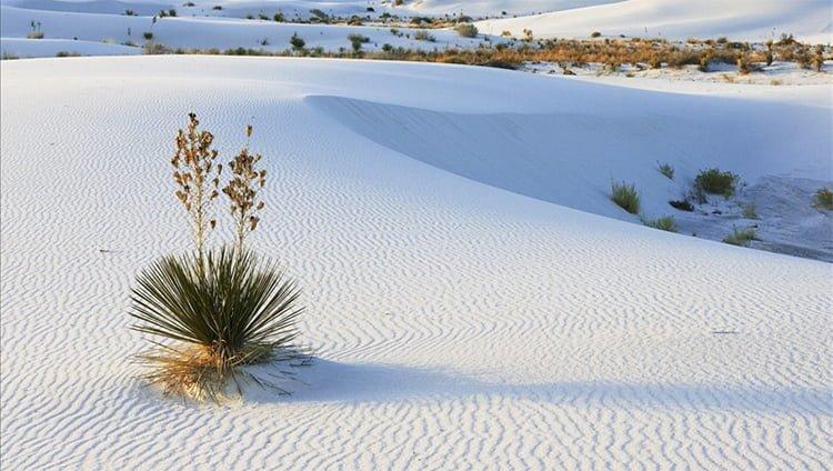 Đồi cát trắng trải dài vô tận ở Phan Thiết (ảnh sưu tầm)