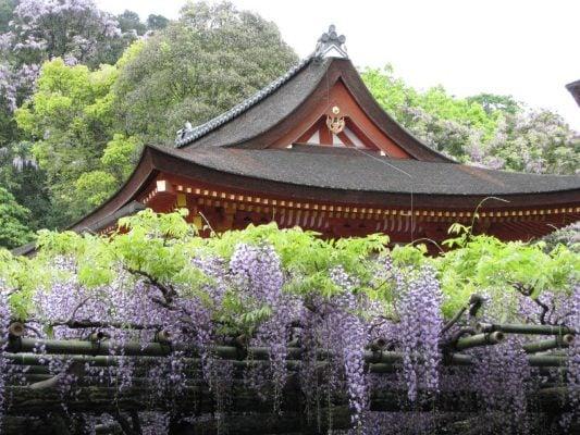 Hoa ở đền Kasuga Taisha (ảnh internet)