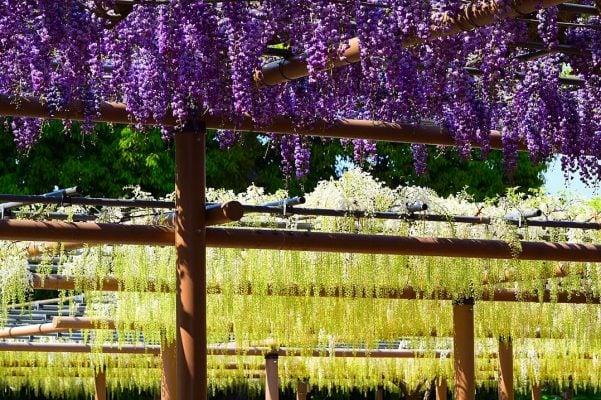 Hoa nở ở xung quanh đền Mandaraji (ảnh internet)