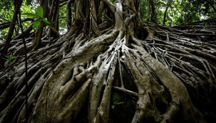 Khám phá vẻ đẹp của rừng thiêng ( ảnh sưu tầm)