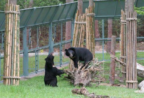 Những chú Gấu ở Đảo Tiên (ảnh internet)