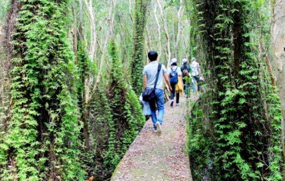 Đi bộ trong khu du lịch Xẻo Quít (ảnh internet)