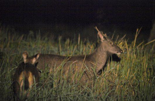 Khám phá cuộc sống về đêm ở vườn quốc gia Cát Tiên (ảnh internet)