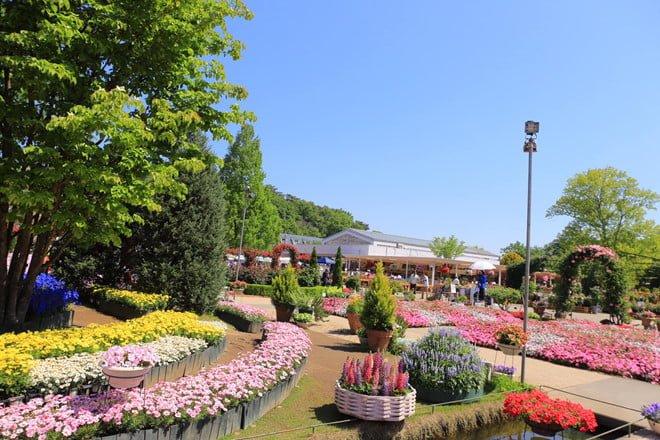 Top 4 lí do khiến bạn xách ba lô du lịch Nhật Bản ngay mùa hè