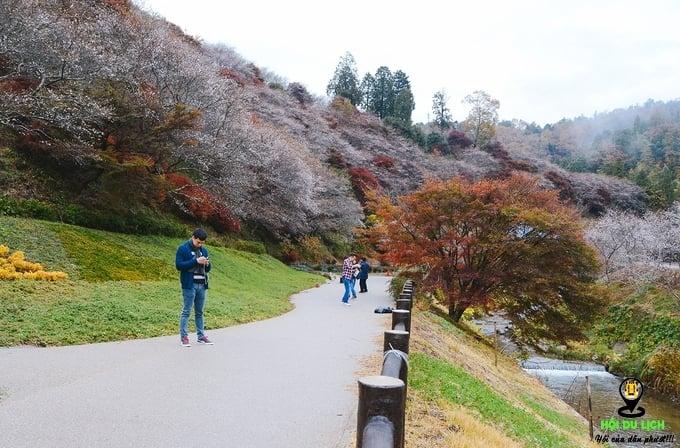 Top 4 ngôi làng yên bình, đẹp như mơ ở xứ sở hoa anh đào- Nhật Bản