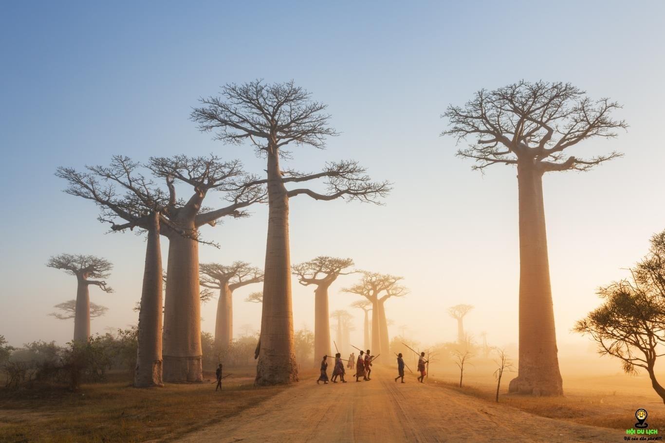 Lạc vào thế giới khác với Bao Báp ở Madagascar