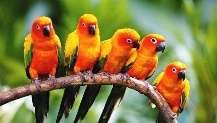 Những chú vẹt đủ sắc màu xinh xắn ở vườn chim Jourong (ảnh sưu tầm)