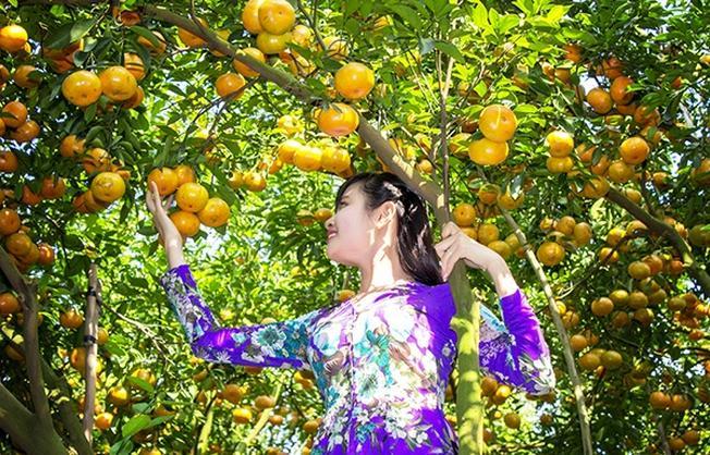 Thưởng thức trái cây miền tây (ảnh sưu tầm)