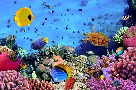 Trải nghiệm lặn biển, ngắm san hô tuyệt đẹp (ảnh internet)
