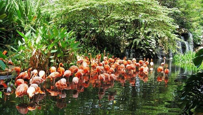 Những chú chim hồng hạc duyên dáng (ảnh sưu tầm)