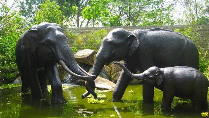 Những chú voi ở Singapo Zoo (ảnh sưu tầm)