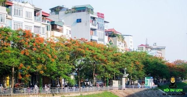 Rạo rực ngắm phố phường Hà Nội mùa phượng vĩ đơm hoa - 2