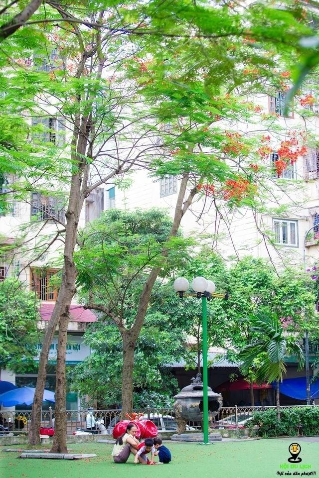 Rạo rực ngắm phố phường Hà Nội mùa phượng vĩ đơm hoa - 11
