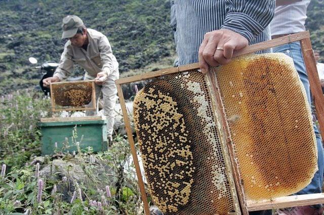 Tìm hiểu quy trình nuôi và lấy mật ong (ảnh sưu tầm)