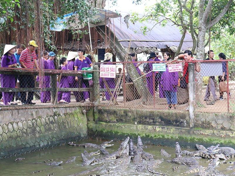 Tham quan trại nuôi cá sấu ở Cồn Phụng(ảnh sưu tầm)